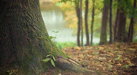 tree trunk 569275  340
