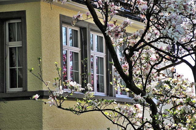 branches windows