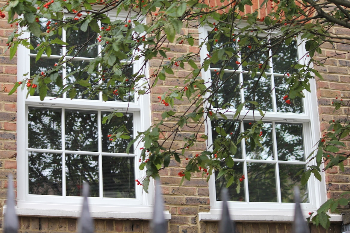 sliding sash windows with branches of leaves in front
